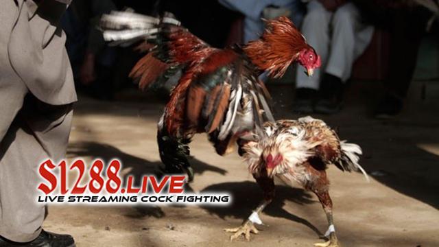Pusat Agen Judi Online Sabung Ayam Termurah 2018